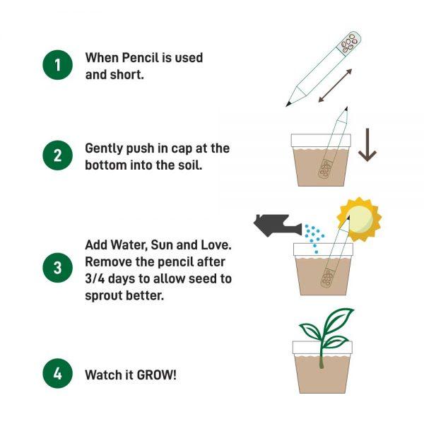 Plantable A Pencils